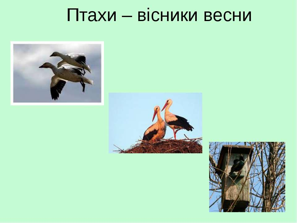 Птахи – вісники весни