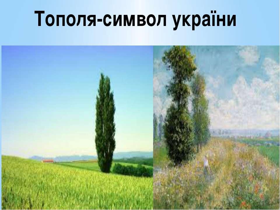 Тополя-символ україни