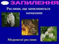 Рослини, що запилюються комахами Медоносні рослини