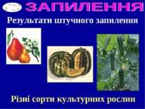 Результати штучного запилення Різні сорти культурних рослин