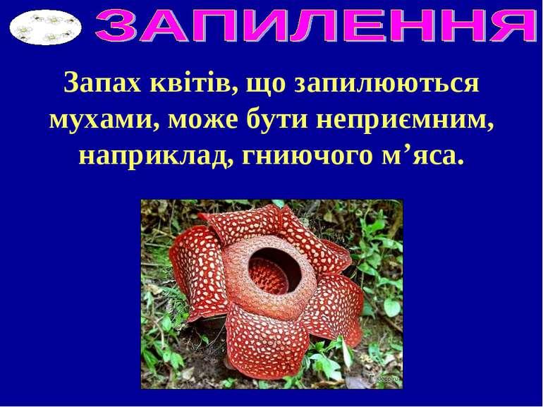 Запах квітів, що запилюються мухами, може бути неприємним, наприклад, гниючог...