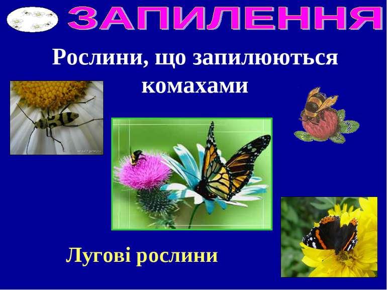 Рослини, що запилюються комахами Лугові рослини