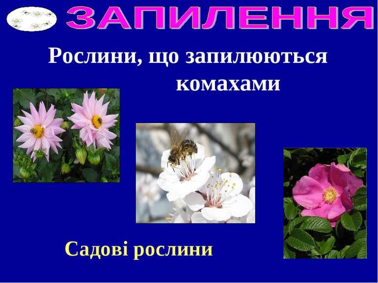 Рослини, що запилюються комахами Садові рослини