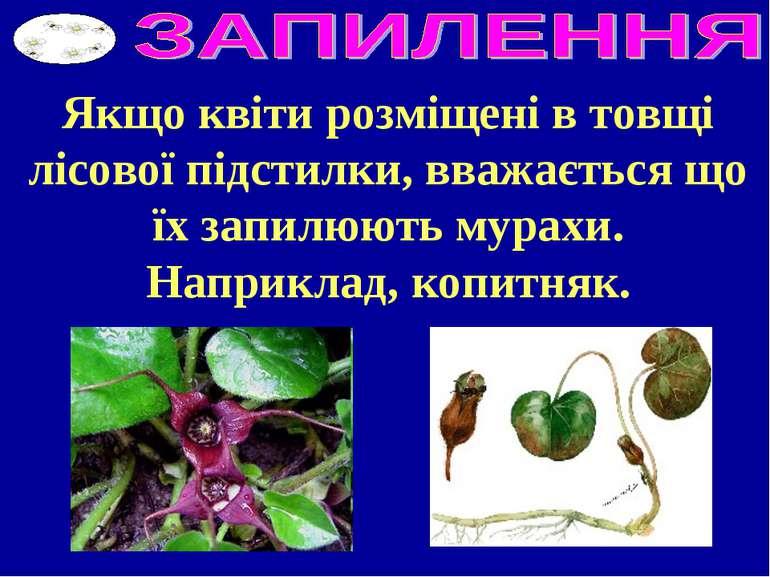 Якщо квіти розміщені в товщі лісової підстилки, вважається що їх запилюють му...