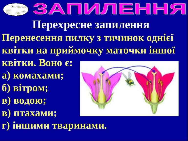 Перехресне запилення Перенесення пилку з тичинок однієї квітки на приймочку м...