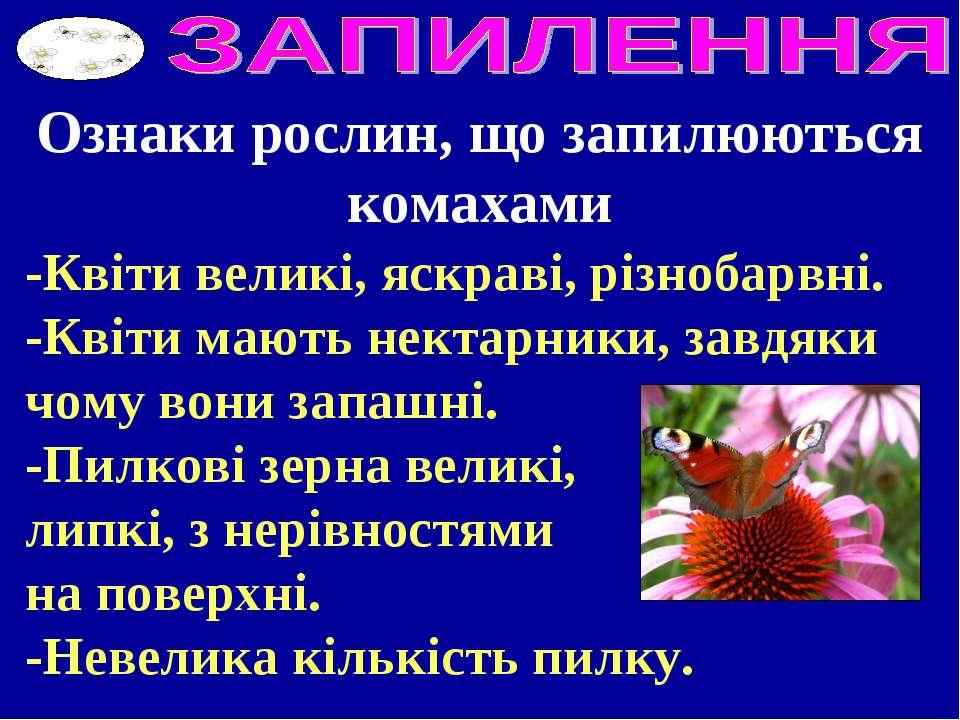 Ознаки рослин, що запилюються комахами -Квіти великі, яскраві, різнобарвні. -...