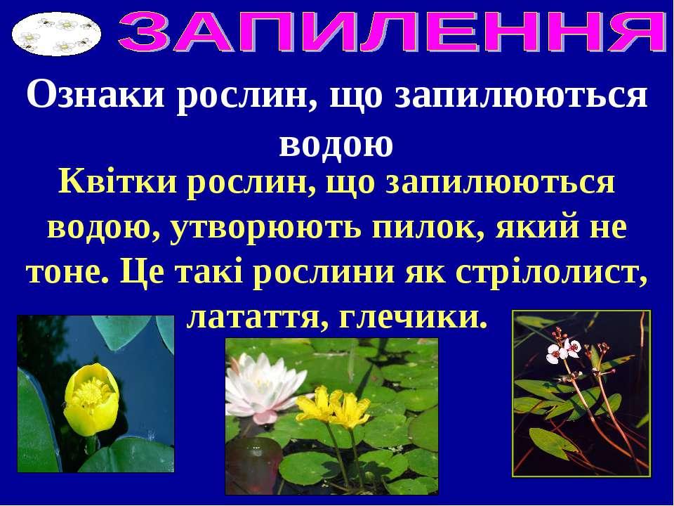Ознаки рослин, що запилюються водою Квітки рослин, що запилюються водою, утво...