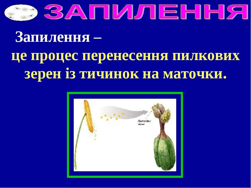 Запилення – це процес перенесення пилкових зерен із тичинок на маточки.