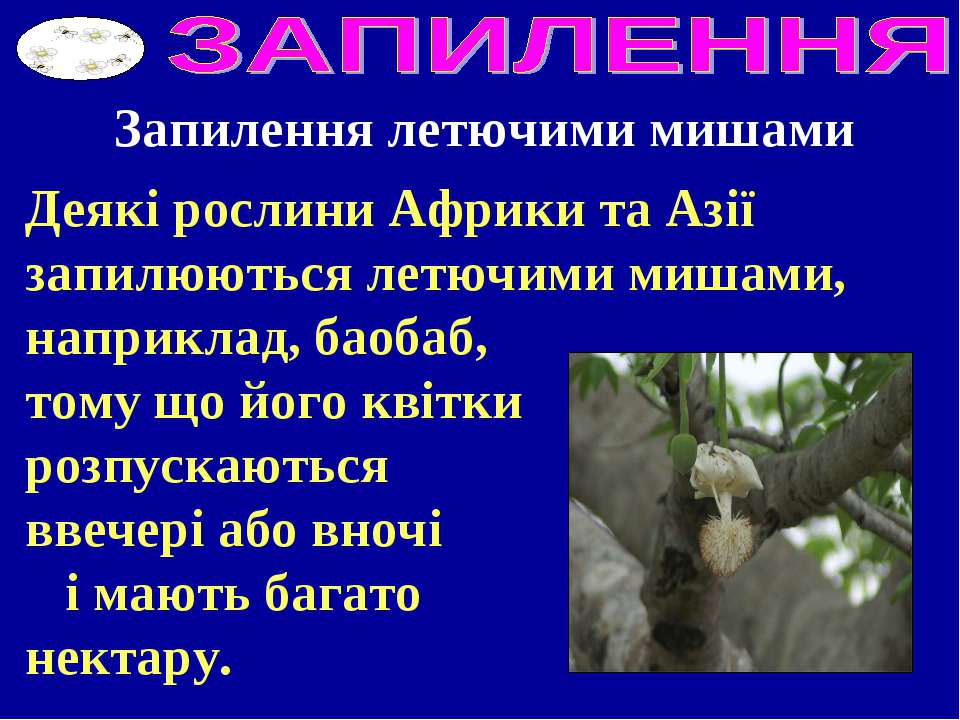 Деякі рослини Африки та Азії запилюються летючими мишами, наприклад, баобаб, ...
