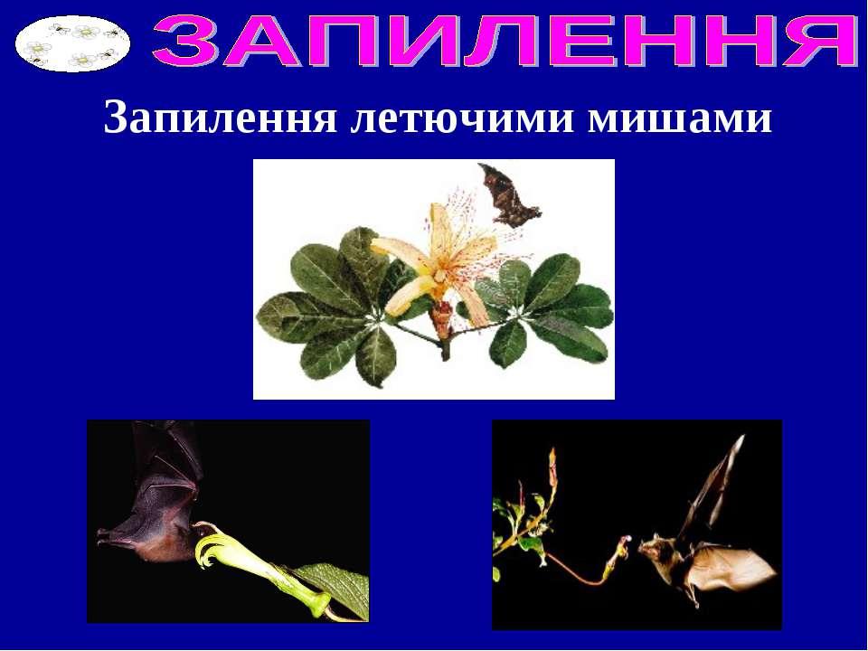 Запилення летючими мишами