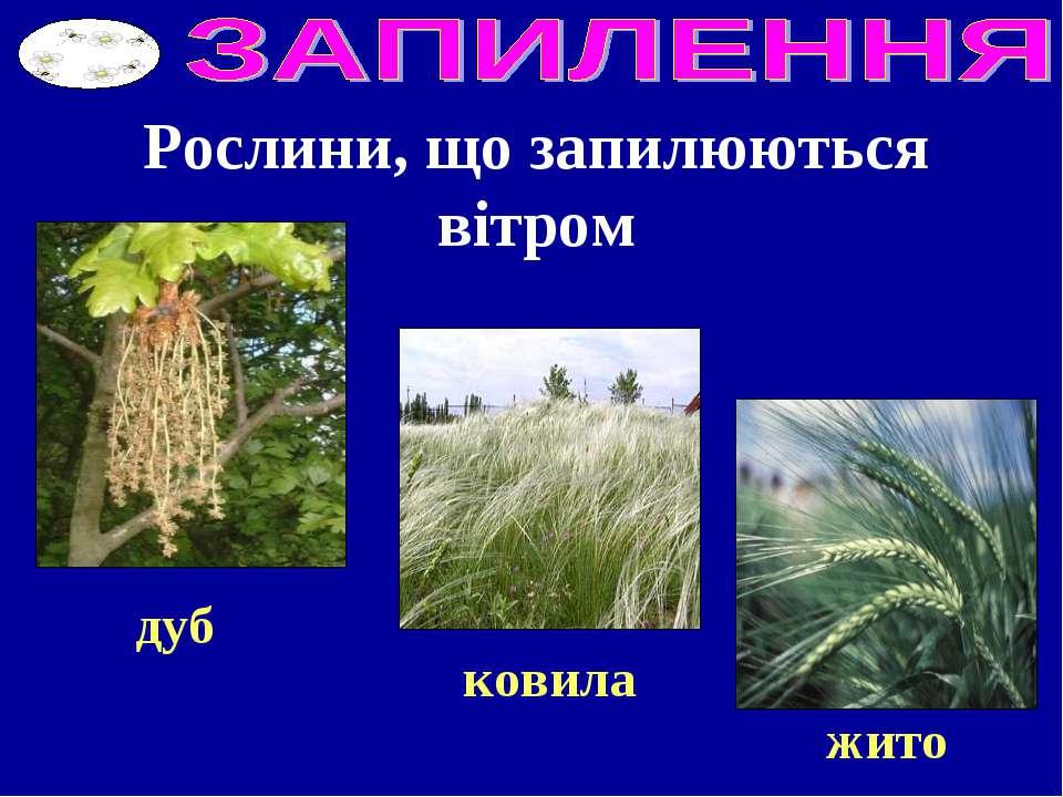 Рослини, що запилюються вітром дуб ковила жито