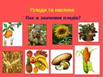 Плоди та насіння Яке ж значення плодів?