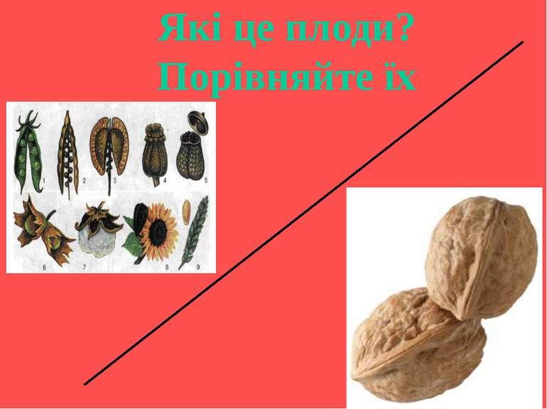 Які це плоди? Порівняйте їх