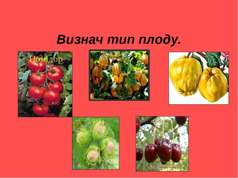 Визнач тип плоду. Помідор