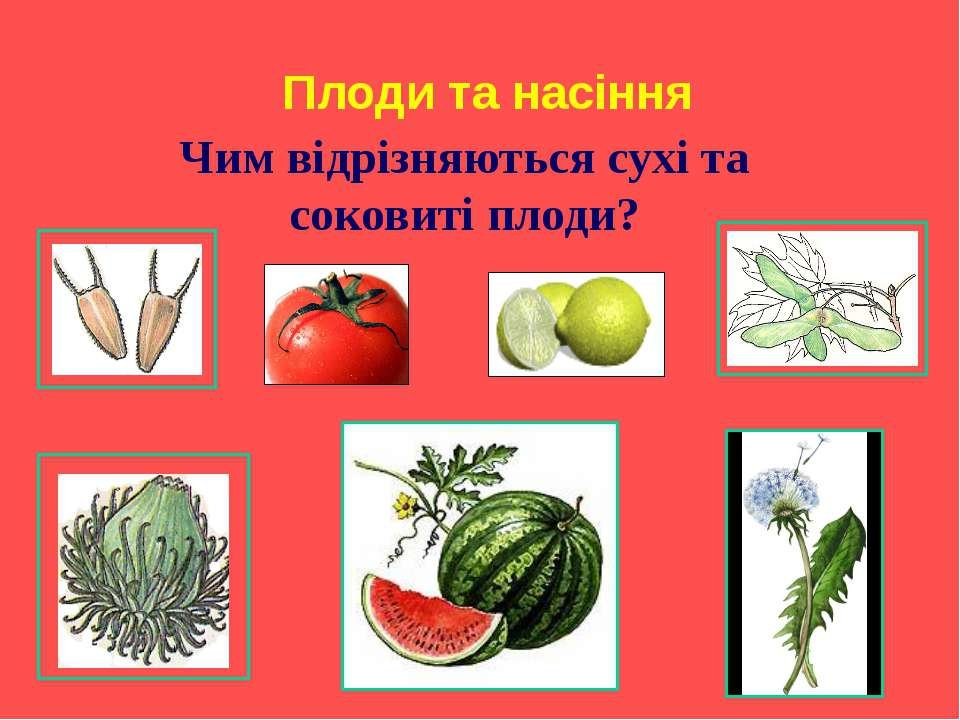 Плоди та насіння Чим відрізняються сухі та соковиті плоди?