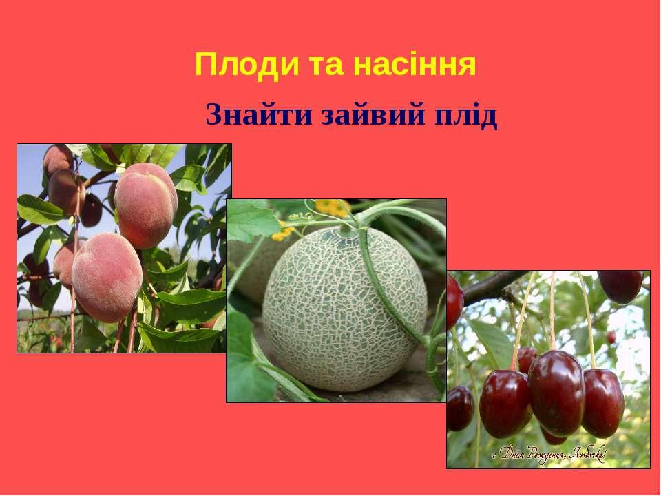 Плоди та насіння Знайти зайвий плід