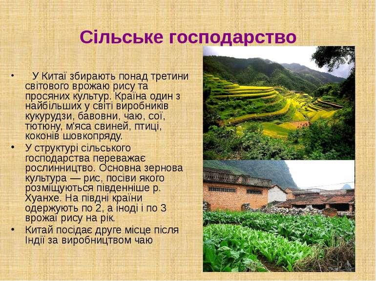 Сільське господарство У Китаї збирають понад третини світового врожаю рису та...