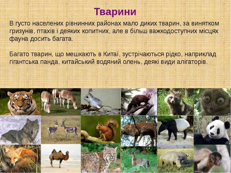 Тварини В густо населених рівнинних районах мало диких тварин, за винятком гр...