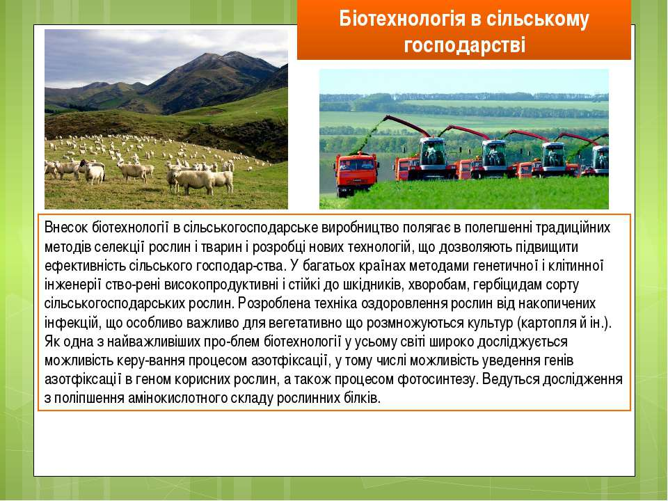 Біотехнологія в сільському господарстві Внесок біотехнології в сільськогоспод...