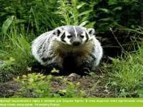 Тваринний світ території національного парку є типовим для Східних Карпат. В ...