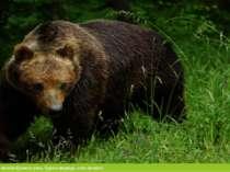 У рідкісних тварин можна віднести рись, бурого ведмідь, кота лісового.