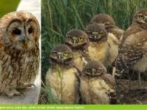 З птахів тут поширені сокіл, сова сіра, дятел та інші типові представникі Кар...