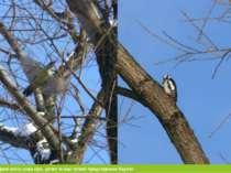 З птахів тут поширені сокіл, сова сіра, дятел та інші типові представники Кар...