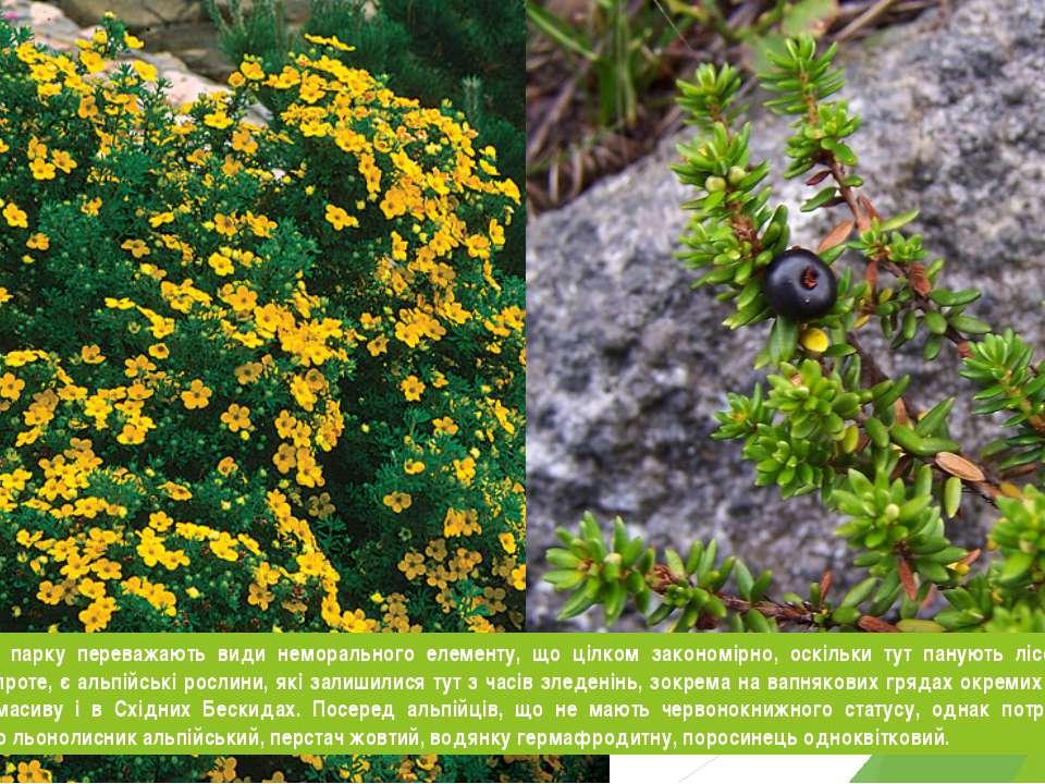 У складі флори парку переважають види неморального елементу, що цілком законо...