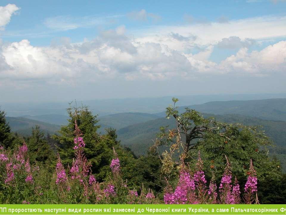 В Ужанському НПП проростають наступні види рослин які занесені до Червоної кн...