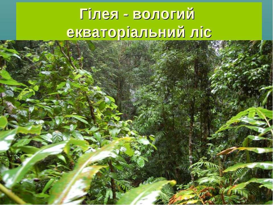 Гілея - вологий екваторіальний ліс