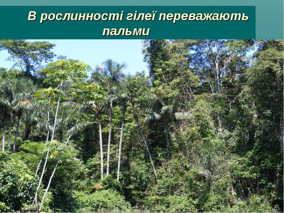 В рослинності гілеї переважають пальми