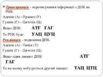Транскрипція – переписування інформації з ДНК на РНК. Аденін (А) –Урацил (У) ...
