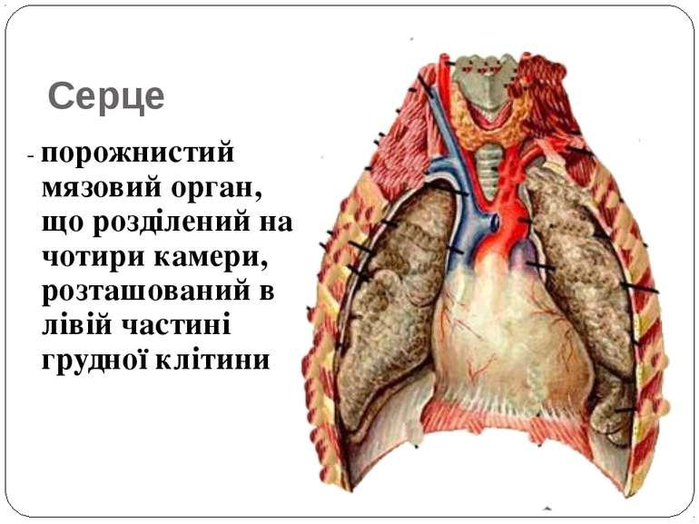 Серце - порожнистий мязовий орган, що розділений на чотири камери, розташован...