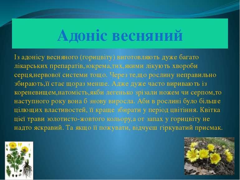 Адоніс весняний Із адонісу весняного (горицвіту) виготовляють дуже багато лік...