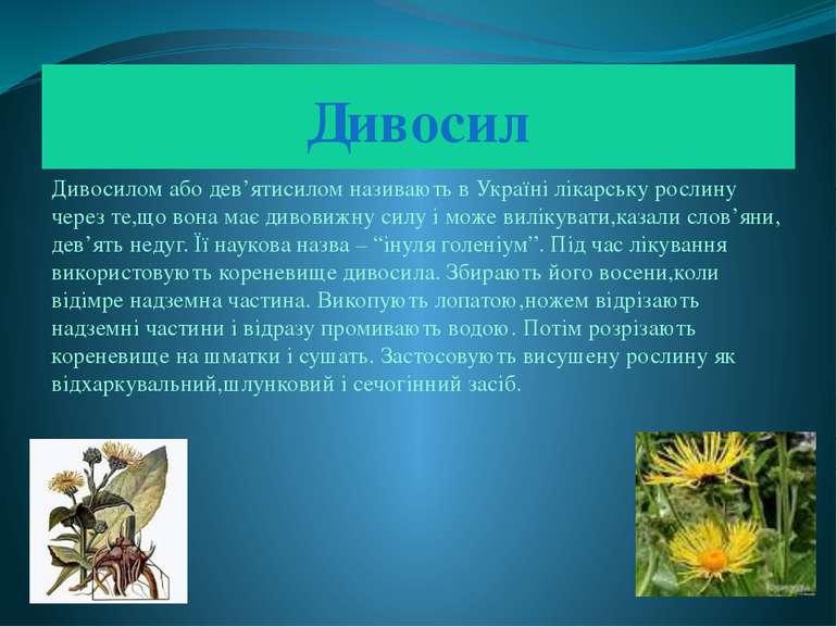 Дивосил Дивосилом або дев'ятисилом називають в Україні лікарську рослину чере...