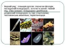 Верхній ряд: : планарія дугезія, глазчатая філлідія, наслідуючий псевдоцерос,...