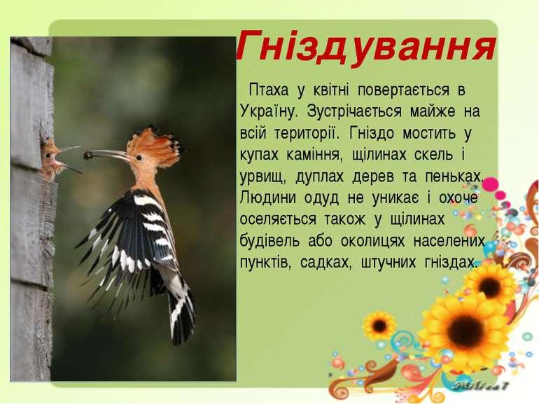 Гніздування Птаха у квітні повертається в Україну. Зустрічається майже на всі...
