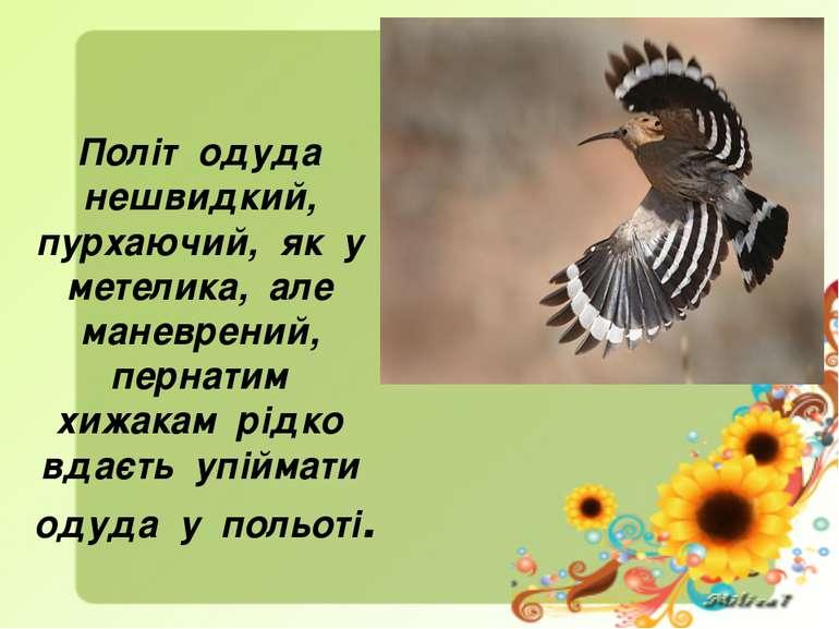 Політ одуда нешвидкий, пурхаючий, як у метелика, але маневрений, пернатим хиж...