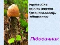 Підосичник Росте біля осичок звично Красноголовець -підосичник