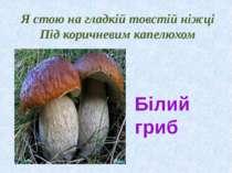 Я стою на гладкій товстій ніжці Під коричневим капелюхом Білий гриб