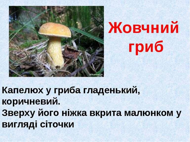 Жовчний гриб Капелюх у гриба гладенький, коричневий. Зверху його ніжка вкрита...