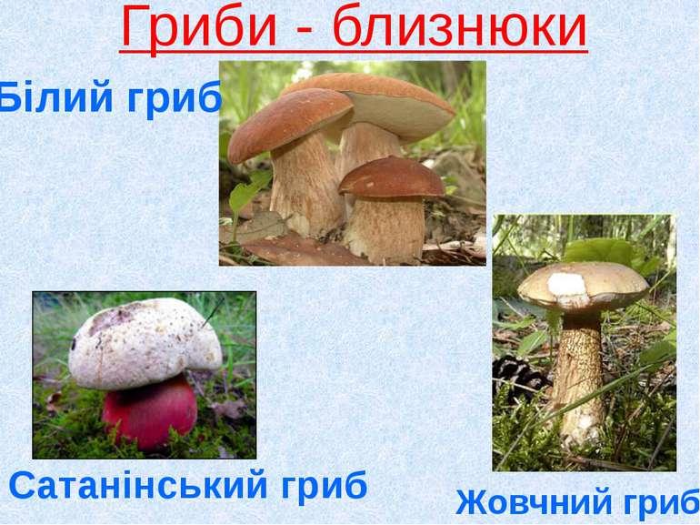 Гриби - близнюки Сатанінський гриб Жовчний гриб Білий гриб