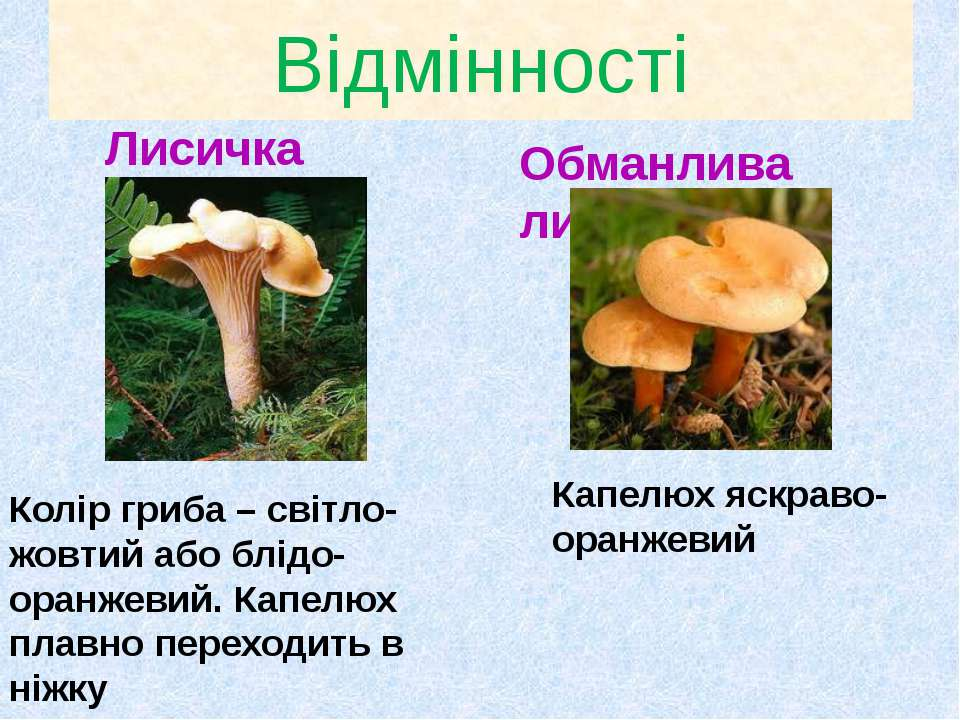 Відмінності Лисичка Обманлива лисичка Колір гриба – світло-жовтий або блідо-о...