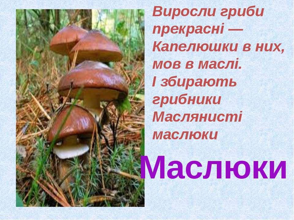 Маслюки Виросли гриби прекрасні — Капелюшки в них, мов в маслі. І збирають гр...