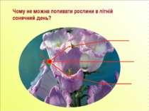 Чому не можна поливати рослини в літній сонячний день?