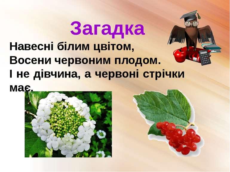 Загадка Навесні білим цвітом, Восени червоним плодом. І не дівчина, а червоні...