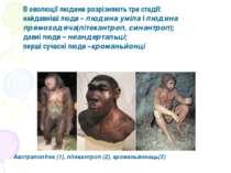 Австралопітек (1), пітекантроп (2), кроманьйонець(3) В еволюції людини розріз...