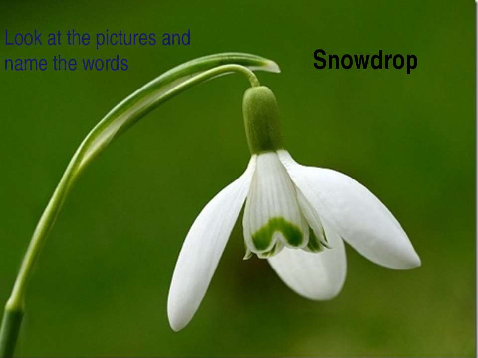 Snowdrop Look at the pictures and name the words