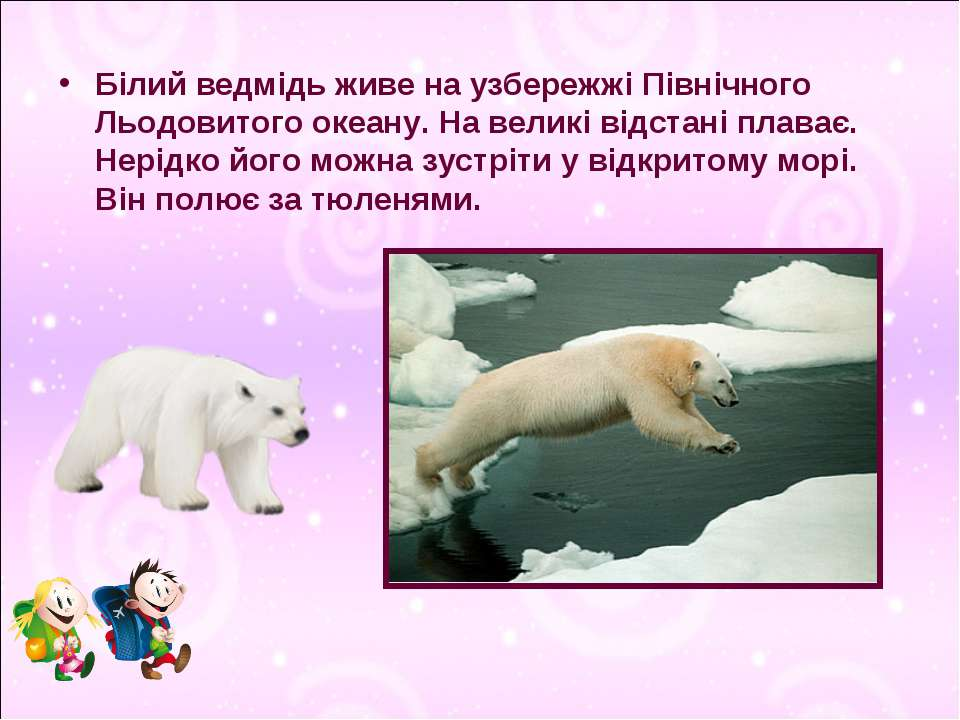 Білий ведмідь живе на узбережжі Північного Льодовитого океану. На великі відс...
