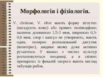 Морфологія і фізіологія. V. cholerae, V. eltor мають форму зігнутих (нагадуют...